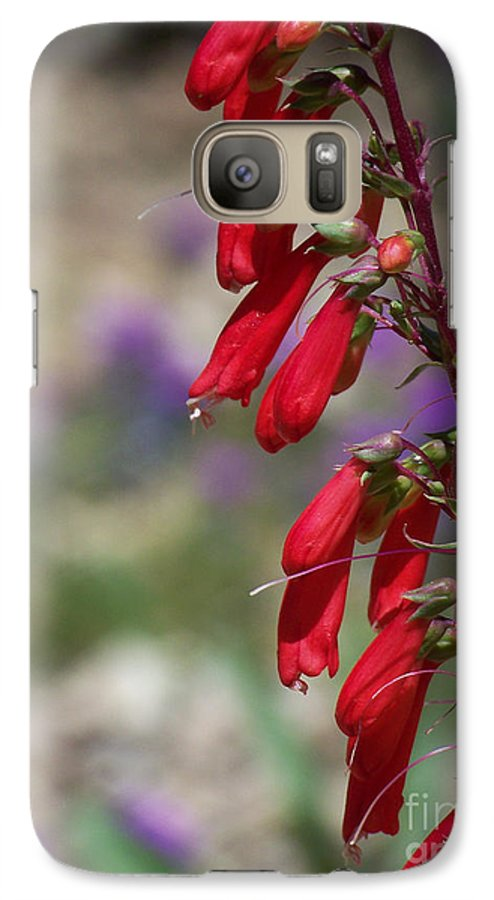 Flowers Galaxy S7 Case featuring the photograph Penstemon by Kathy McClure