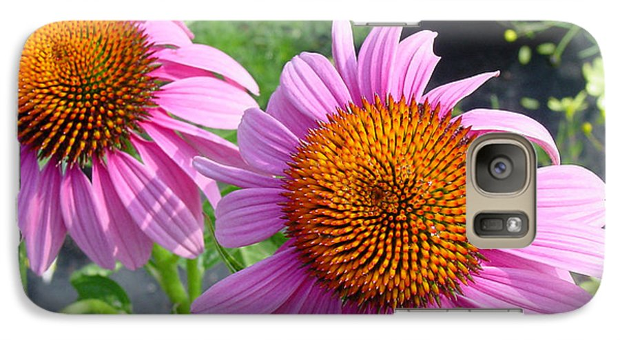 Flower Galaxy S7 Case featuring the photograph Purple Coneflowers by Suzanne Gaff