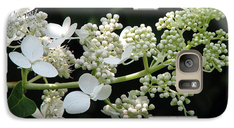 Hydrangea Galaxy S7 Case featuring the photograph Simply by Amanda Barcon