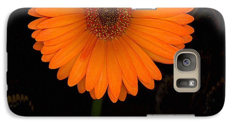 Gerbera Daisy Galaxy S7 Case featuring the photograph Standing Tall by Suzanne Gaff