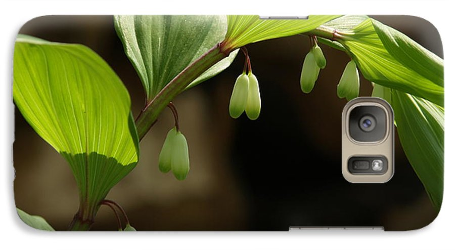 Solomon's Seal Galaxy S7 Case featuring the photograph Variegated Solomon's Seal In Spring - Pennsylvania by Anna Lisa Yoder