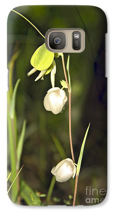 Wildflowers; Globes; Nature; Green; White Galaxy S7 Case featuring the photograph Whispers by Kathy McClure