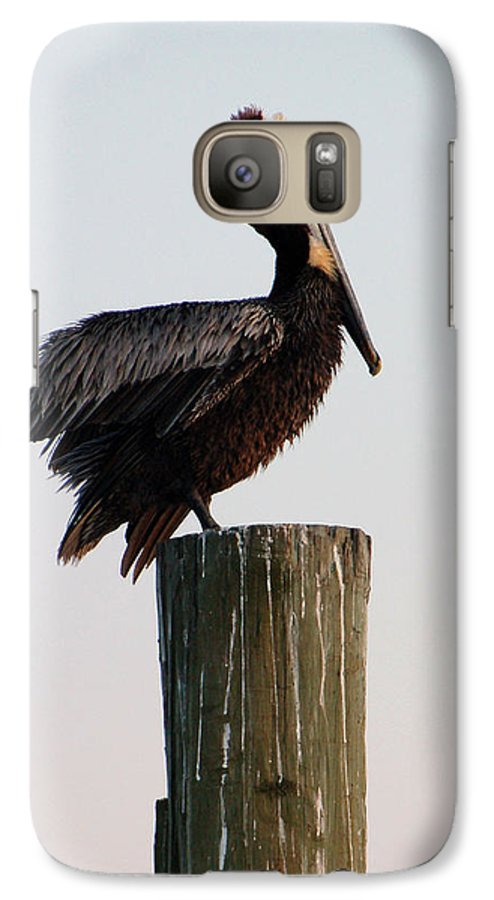 Brown Pelican Galaxy S7 Case featuring the photograph Will This Pose Do by Suzanne Gaff