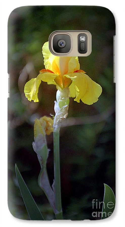 Iris Galaxy S7 Case featuring the photograph Yellow Iris by Kathy McClure