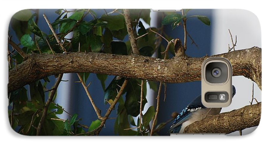 Birds Galaxy S7 Case featuring the photograph Blue Bird by Rob Hans