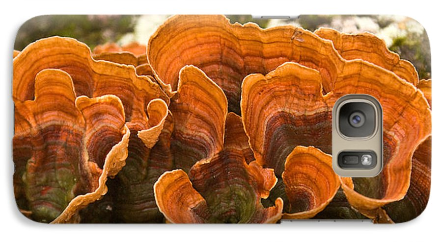 Bracket Galaxy S7 Case featuring the photograph Bracket Fungi by Douglas Barnett