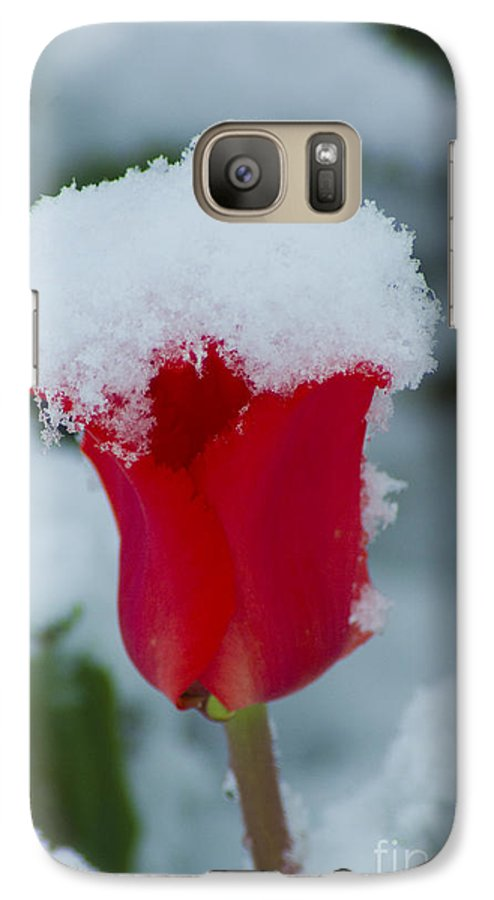 Tulip Galaxy S7 Case featuring the photograph Snowy Red Riding Hood by Louise Magno