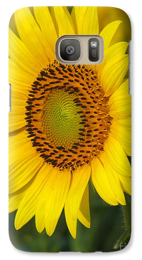 Sunflowers Galaxy S7 Case featuring the photograph Sunflower by Amanda Barcon