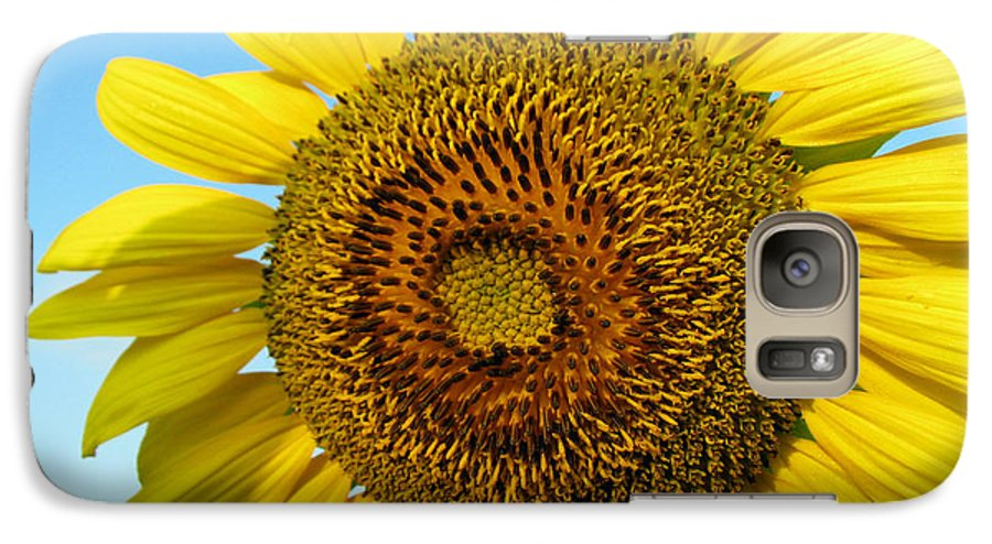 Sunflower Galaxy S7 Case featuring the photograph Sunflower Series by Amanda Barcon