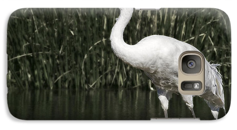 Whooping Galaxy S7 Case featuring the photograph Whooping Crane by Al Mueller