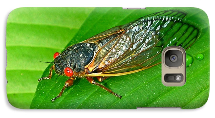 17 Galaxy S7 Case featuring the photograph 17 Year Periodical Cicada by Douglas Barnett