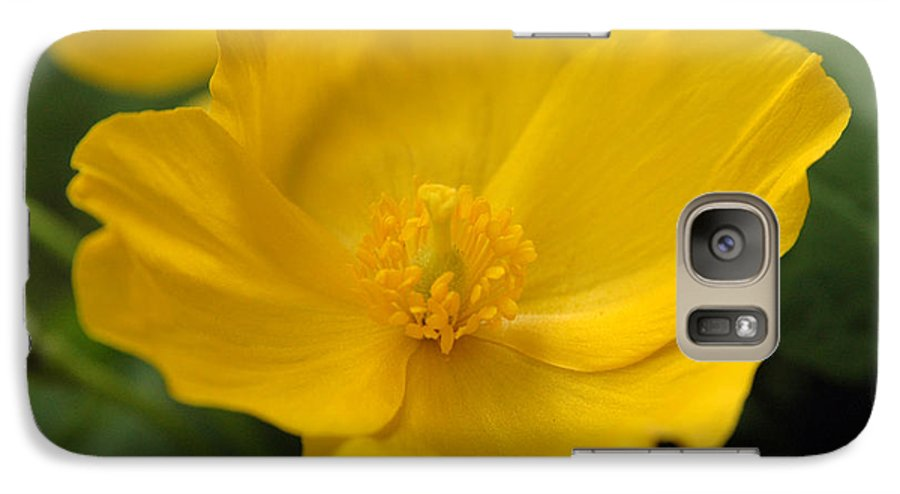 Yellow Galaxy S7 Case featuring the photograph Untitled by Kathy Schumann