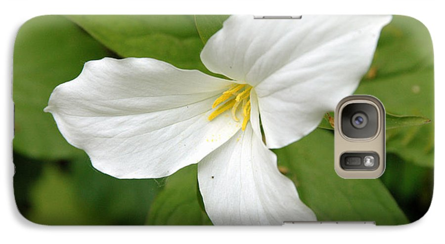 White Galaxy S7 Case featuring the photograph Untitled by Kathy Schumann