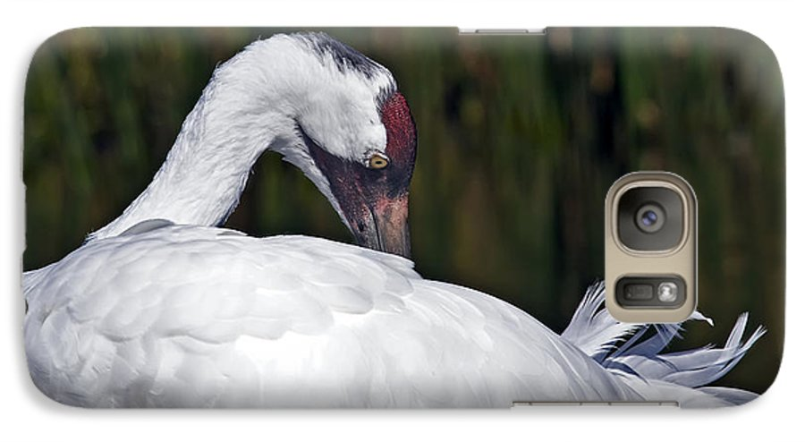Avian Galaxy S7 Case featuring the photograph A Preening Whooping Crane by Al Mueller