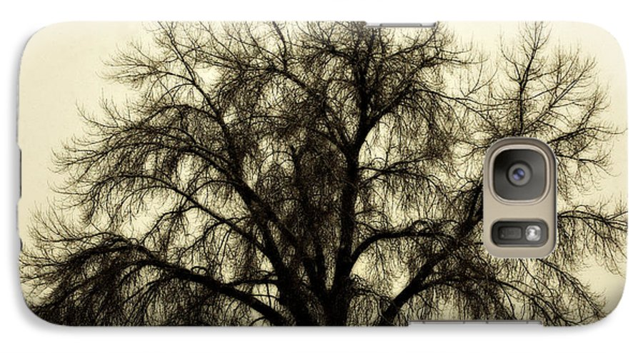 Tree Galaxy S7 Case featuring the photograph A Winter's Day by Marilyn Hunt