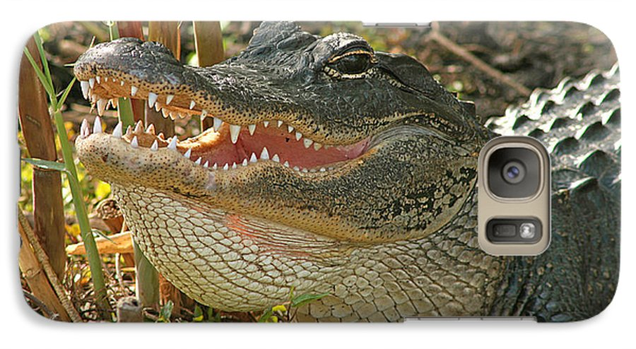 Alligator Galaxy S7 Case featuring the photograph Alligator Showing Its Teeth by Max Allen