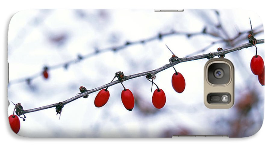 Barberry Galaxy S7 Case featuring the photograph American Barberry In Snow by Anna Lisa Yoder