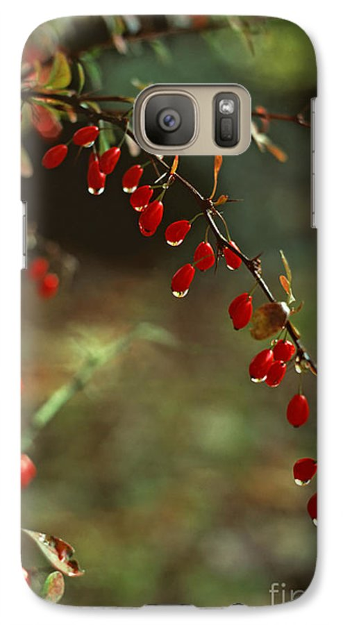Pennsylvania Galaxy S7 Case featuring the photograph American Barberry With Raindrops by Anna Lisa Yoder