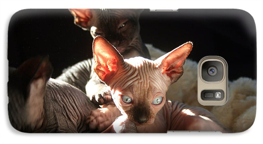 Photo Galaxy S7 Case featuring the photograph Baby Sphynx Cats by Ruben Flanagan