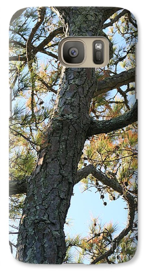 Tree Galaxy S7 Case featuring the photograph Bald Head Tree by Nadine Rippelmeyer