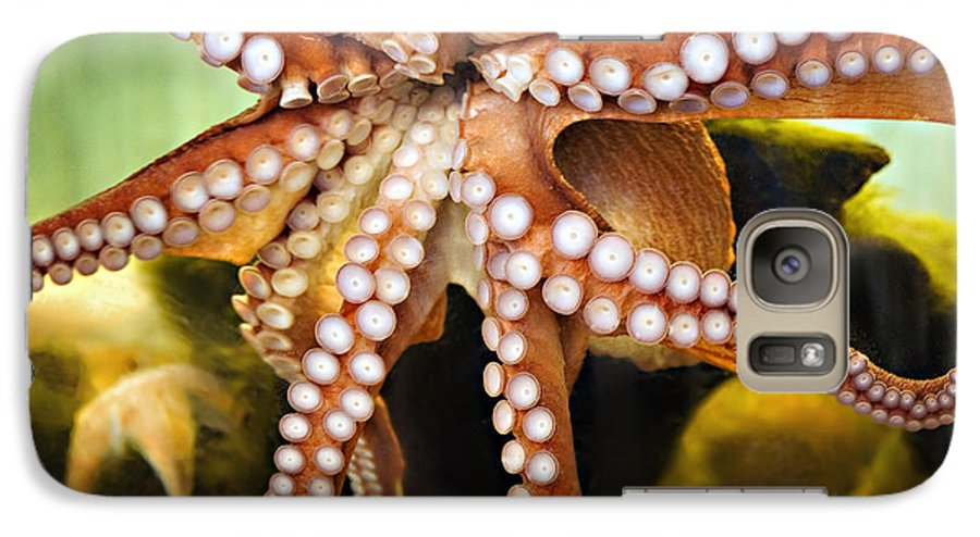 Octopus Galaxy S7 Case featuring the photograph Beautiful Octopus by Marilyn Hunt