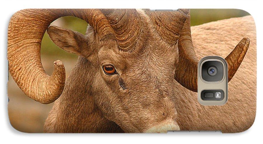 Bighorn Galaxy S7 Case featuring the photograph Bighorn Ram With Evident Disdain by Max Allen