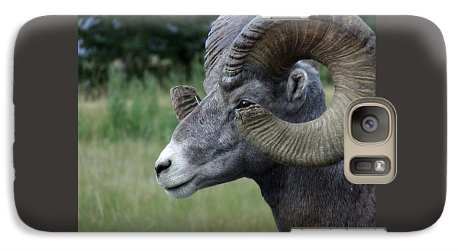 Big Horned Ram Galaxy S7 Case featuring the photograph Bighorned Ram by Tiffany Vest