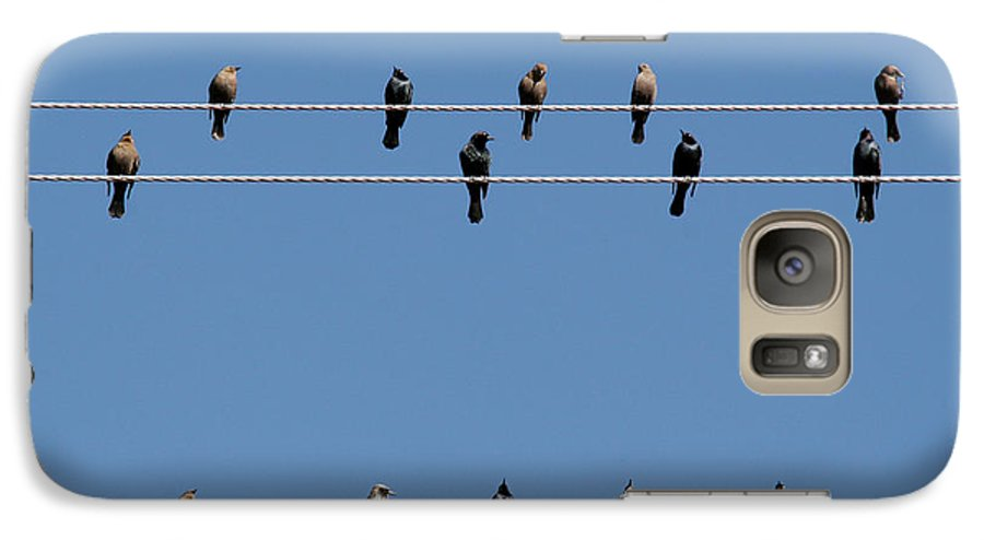Birds Galaxy S7 Case featuring the photograph Bird On A Wire by Christine Till