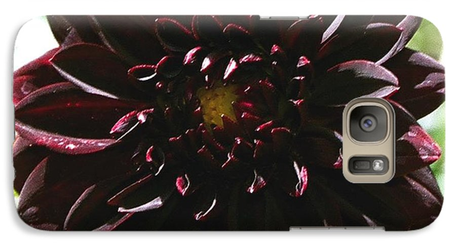 Flower Galaxy S7 Case featuring the photograph Black Dalia by Dean Triolo