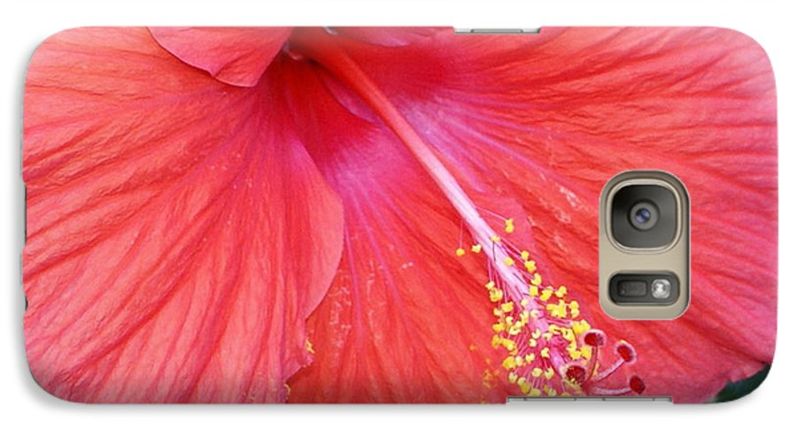 Flowers Galaxy S7 Case featuring the photograph Blushing Stamen by Debbie May