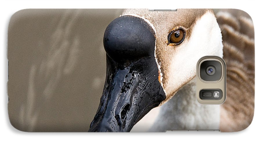 Chinese Brown Goose Galaxy S7 Case featuring the photograph Brown Eye by Christopher Holmes