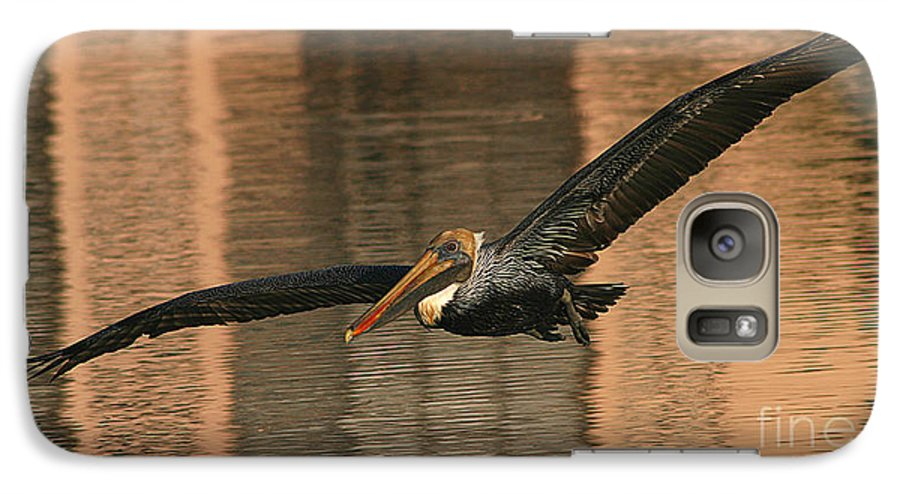 Pelican Galaxy S7 Case featuring the photograph Brown Pelican On A Sunset Flyby by Max Allen