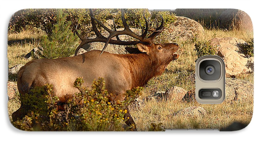 Elk Galaxy S7 Case featuring the photograph Bull Elk Bugling Among The Rocks by Max Allen