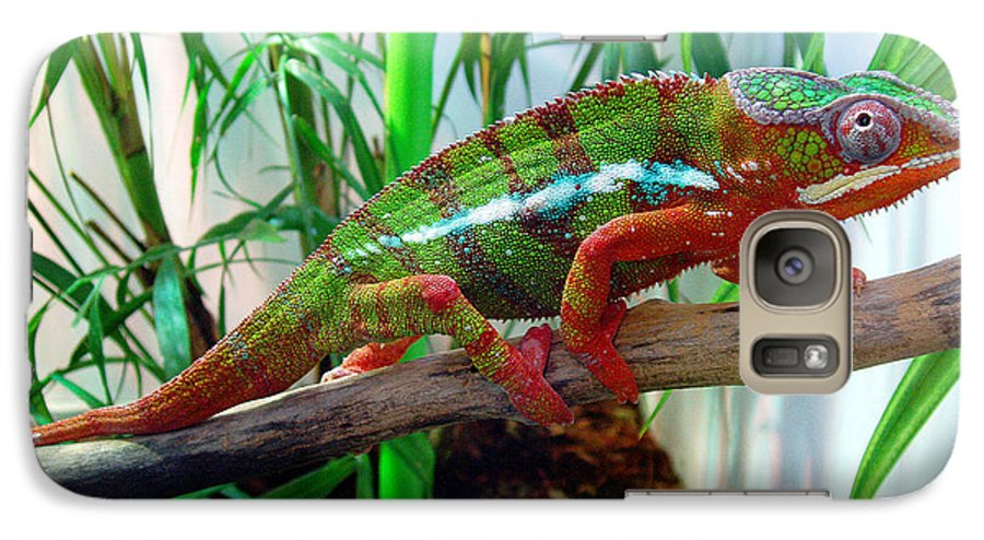 Chameleon Galaxy S7 Case featuring the photograph Colorful Chameleon by Nancy Mueller