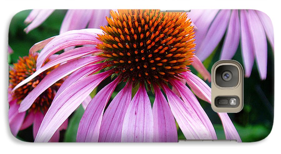Coneflowers Galaxy S7 Case featuring the photograph Three Coneflowers by Nancy Mueller