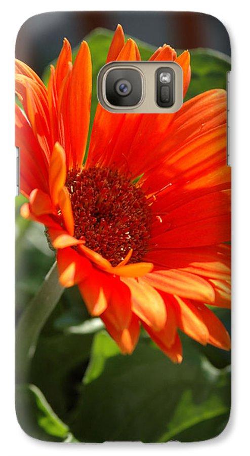 Daisy Galaxy S7 Case featuring the photograph Daisy by Kathy Schumann