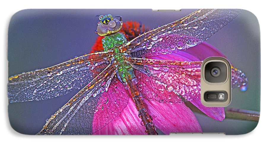 Dew Covered Dragonfly Rests On Purple Cone Flower Galaxy S7 Case featuring the photograph Dreaming Dragon by Bill Morgenstern