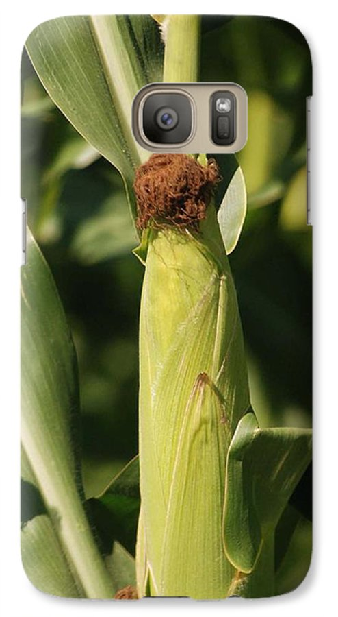 Farm Galaxy S7 Case featuring the photograph Ear Of Corn by Margaret Fortunato
