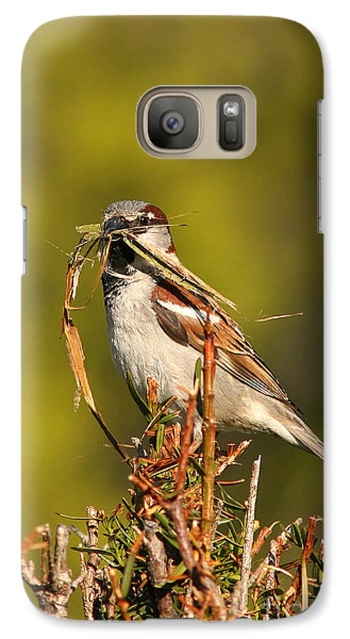 Sparrow Galaxy S7 Case featuring the photograph English Sparrow Bringing Material To Build Nest by Max Allen