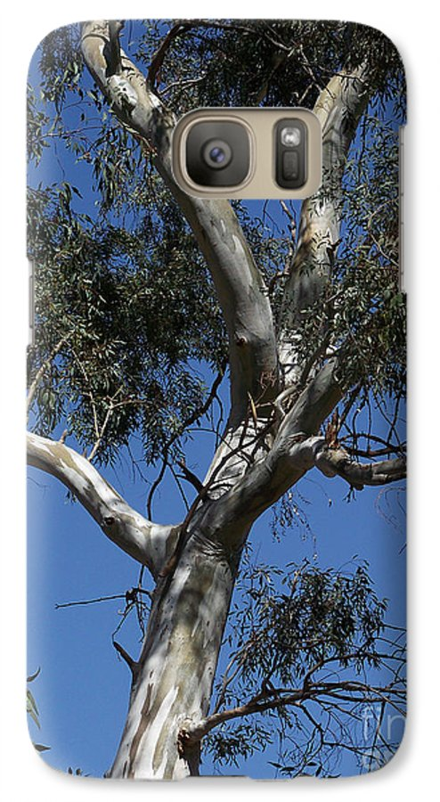 Trees Galaxy S7 Case featuring the photograph Eucalyptus by Kathy McClure