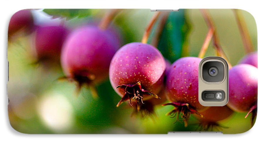 Berry Galaxy S7 Case featuring the photograph Fall Berries by Marilyn Hunt