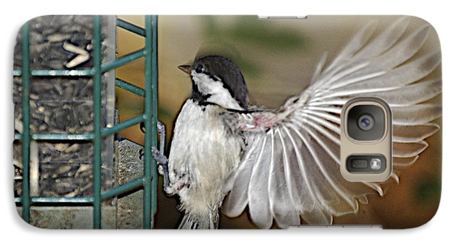 Chickadee In Flight Galaxy S7 Case featuring the photograph Fan Dance by Faith Harron Boudreau