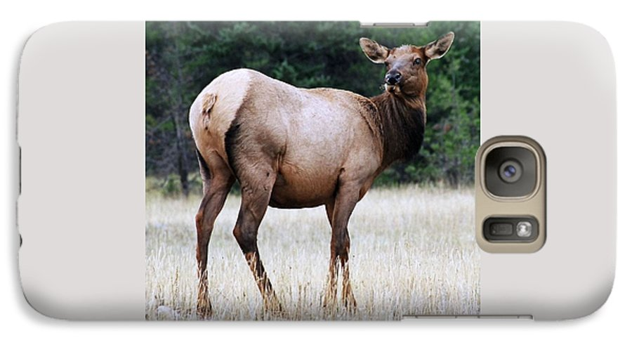 Elk Galaxy S7 Case featuring the photograph Feme Elk by Tiffany Vest