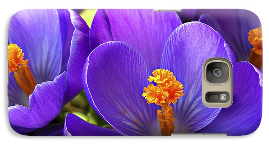 Flower Galaxy S7 Case featuring the photograph First Crocus by Marilyn Hunt