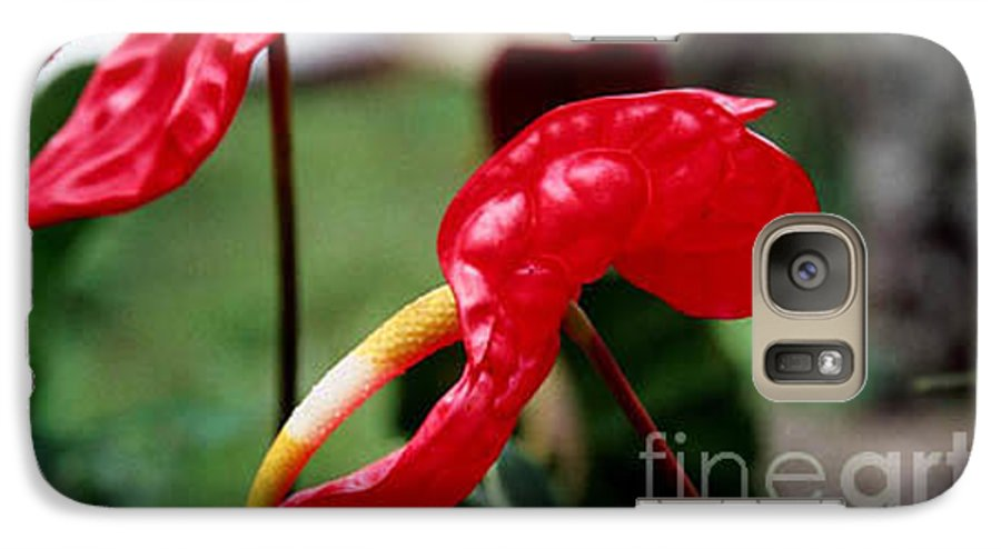Exotic Flowers Galaxy S7 Case featuring the photograph Flamingo Flower by Kathy McClure