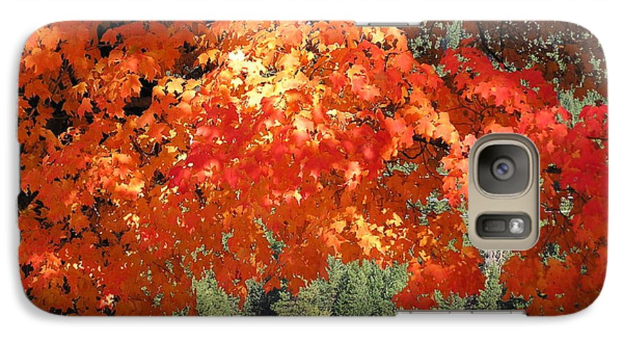 Autumn Photographs Galaxy S7 Case featuring the photograph Flickering Sunlight by Louise Magno