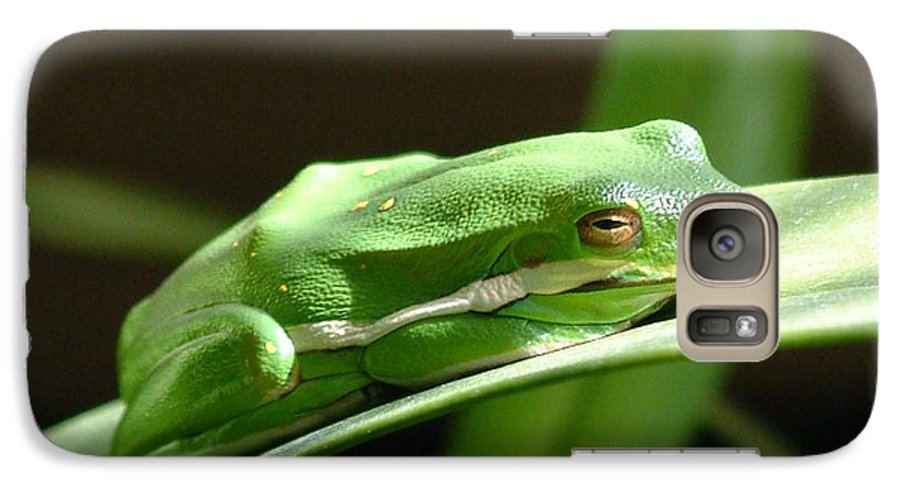 Frog Galaxy S7 Case featuring the photograph Florida Tree Frog by Ned Stacey