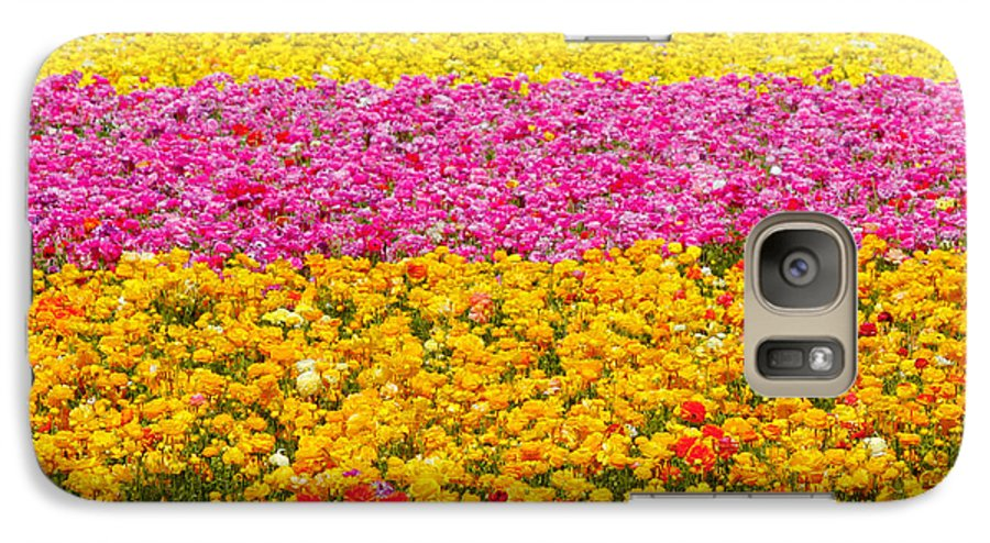 Flower Galaxy S7 Case featuring the photograph Flower Fields Carlsbad Ca Giant Ranunculus by Christine Till