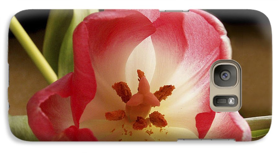 Flowers Galaxy S7 Case featuring the photograph Flower Tulip by Nancy Griswold