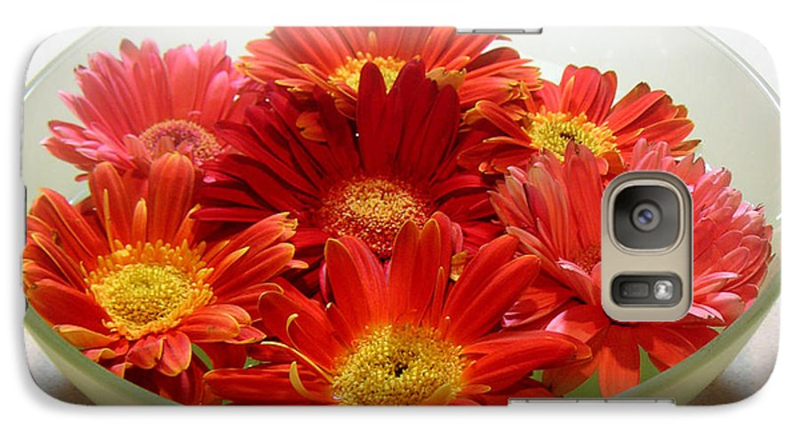 Nature Galaxy S7 Case featuring the photograph Gerbera Daisies - A Bowl Full by Lucyna A M Green